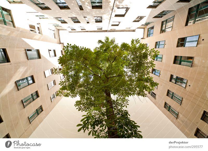 Das Fenster zum Hof 12 Himmel Natur grün Pflanze Baum Sonne Freude Haus Umwelt gelb Gefühle Frühling Architektur Gebäude hell Stimmung