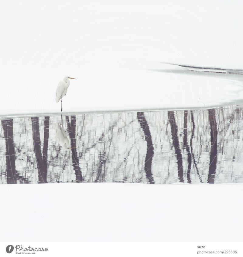 Herr Strese und der lange Sonntag Natur schön Wasser Baum Tier Winter Umwelt kalt Schnee hell natürlich Vogel außergewöhnlich Wildtier elegant warten