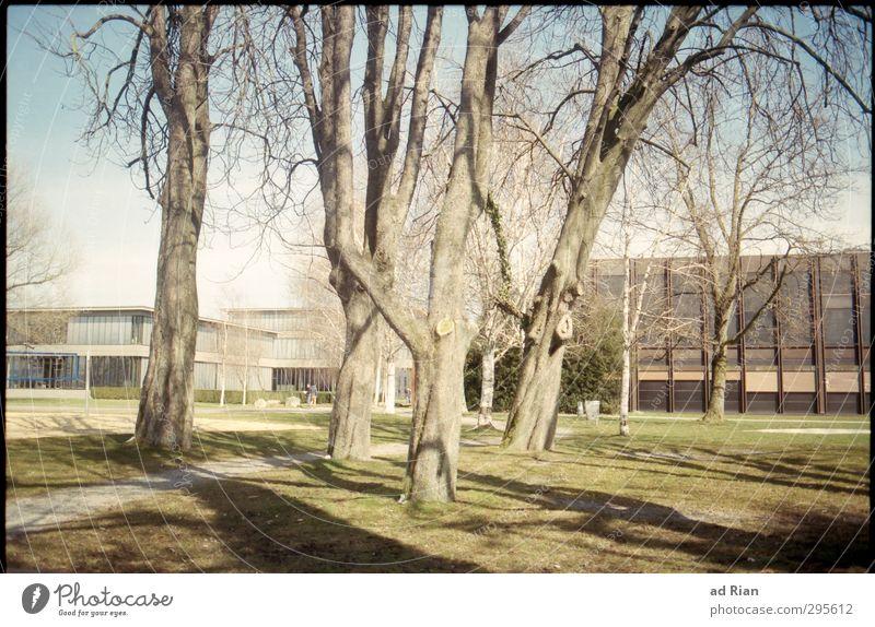was bleibt, ist die Veränderung. Winter Schönes Wetter Baum Gras Park Wiese bevölkert Haus Platz Bauwerk Gebäude Architektur Fassade Fußgänger verblüht warten