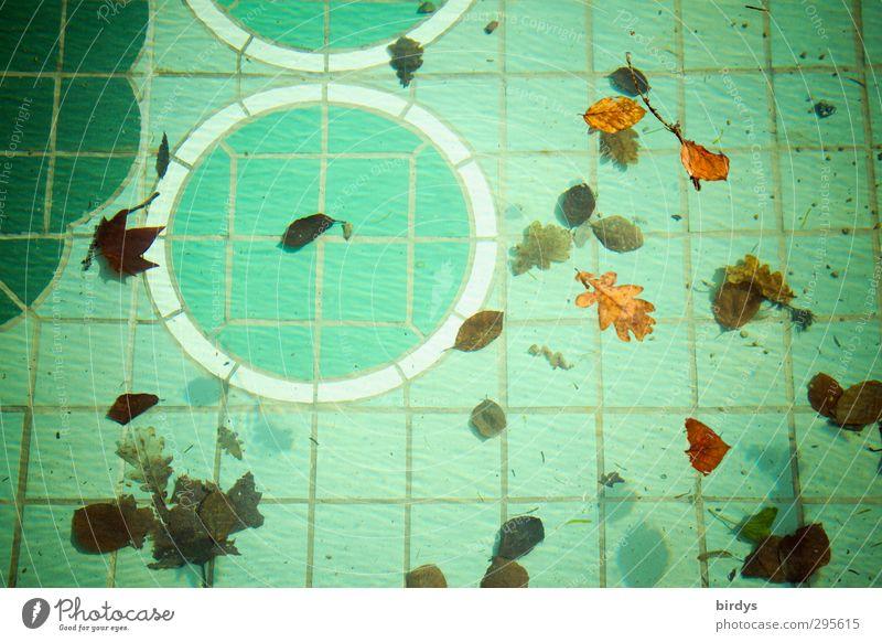 Swimmingpool Schwimmbad Wasser Blatt Herbstlaub Ornament Schwimmen & Baden ästhetisch authentisch braun grün Freizeit & Hobby Natur Wandel & Veränderung