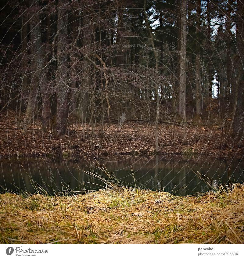 erwartung Natur Pflanze Wasser Baum Landschaft ruhig Tier Winter Frühling Gras Wetter Erde Klima Urelemente Gelassenheit Vorfreude