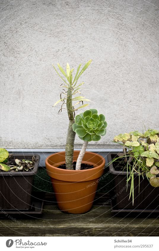 Erwachsen. Topf Lifestyle Häusliches Leben Garten Gartenarbeit Sonnenenergie Energiekrise Umwelt Natur Landschaft Pflanze Erde Frühling Baum Blume Gras