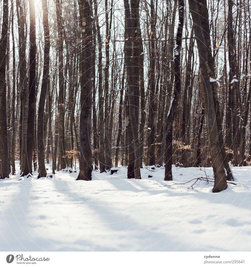 Ein Wintertag Natur Baum Sonne Einsamkeit ruhig Erholung Wald Umwelt kalt Schnee Leben Wege & Pfade träumen Eis wandern