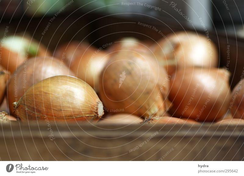 Marktbeobachtung: Zwiebeln Gesunde Ernährung Essen natürlich Gesundheit Lebensmittel braun frisch genießen Kochen & Garen & Backen einfach rund
