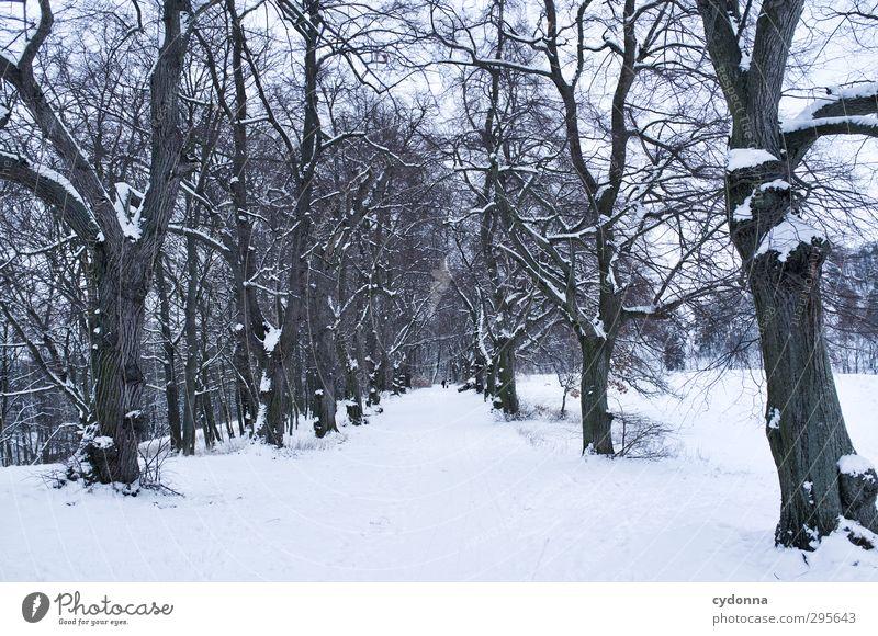 Panoramaweg Erholung ruhig Ausflug Ferne Winterurlaub wandern Mensch 2 Umwelt Natur Landschaft Eis Frost Schnee Baum Bewegung Einsamkeit Horizont Idylle kalt