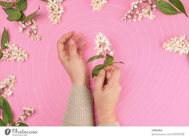 Frau Natur Jugendliche Sommer Pflanze schön grün weiß Hand Blatt 18-30 Jahre Erwachsene Blüte natürlich Feste & Feiern rosa