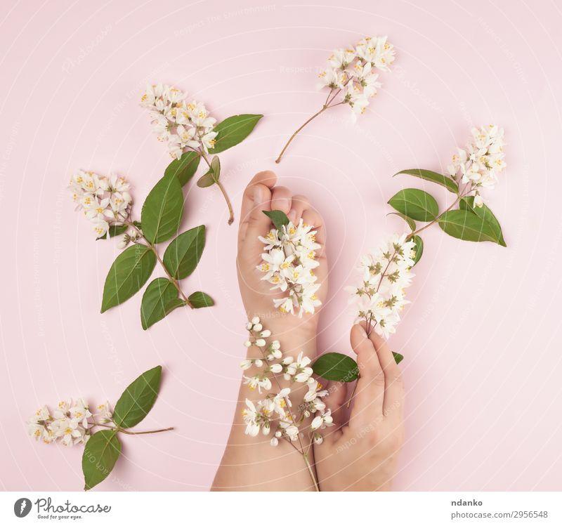 weibliche Hände und rosa kleine weiße Blüten elegant schön Körper Haut Maniküre Kosmetik Behandlung Spa Sommer Frau Erwachsene Hand Finger 1 Mensch 18-30 Jahre
