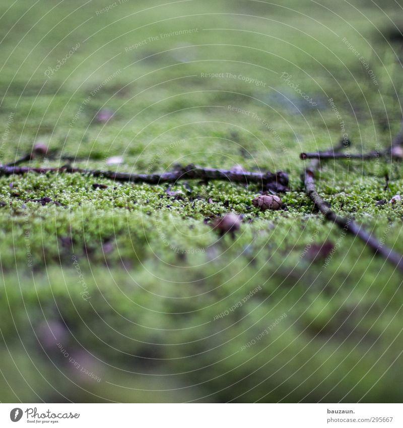 ein grüner weg. Landwirtschaft Forstwirtschaft Umwelt Natur Landschaft Erde Moos Garten Park Wiese Menschenleer Ruine Platz Zapfen Zweig Zweige u. Äste Ast Holz