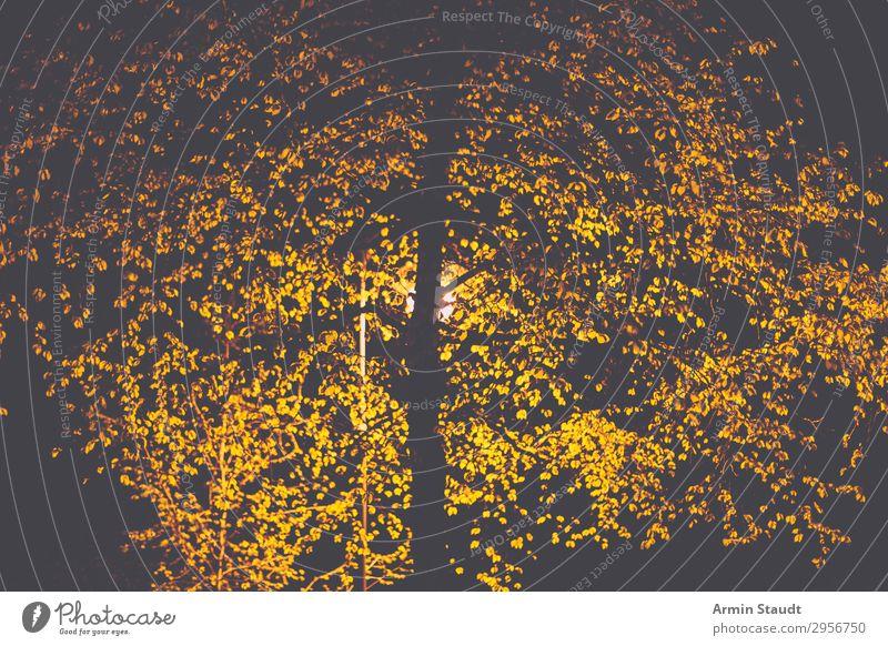 nächtlicher Baum Einsamkeit Blatt dunkel schwarz Straße gelb Umwelt Beleuchtung Stimmung Design Park leuchten Orange trist Ewigkeit
