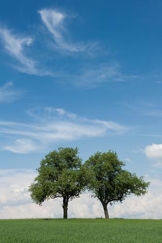better together Himmel Natur blau grün weiß Pflanze Baum Landschaft Wolken Umwelt Wiese Wärme Gras Frühling Horizont Feld