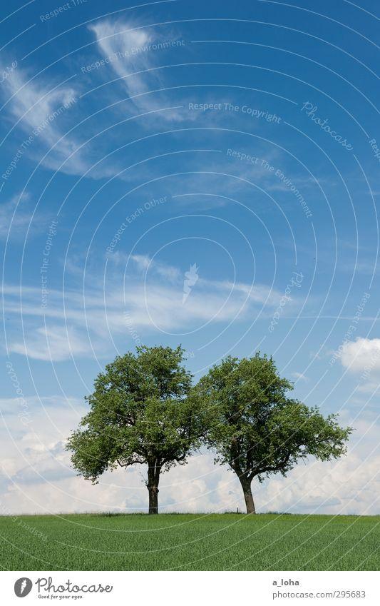 better together Umwelt Natur Landschaft Pflanze Urelemente Himmel Wolken Horizont Frühling Klima Schönes Wetter Wärme Baum Gras Grünpflanze Nutzpflanze Wiese
