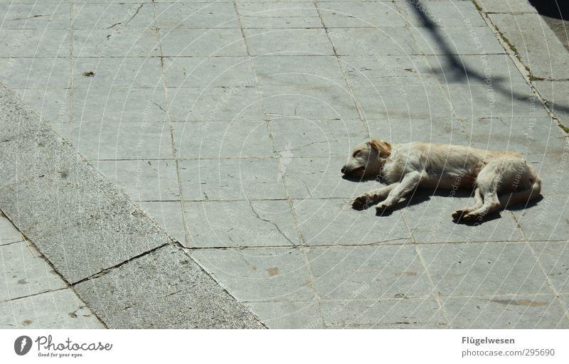 Fauler Hund Ferien & Urlaub & Reisen Stadt Tier Erholung träumen warten Tourismus Beton Ausflug Abenteuer schlafen Pause Müdigkeit Haustier atmen