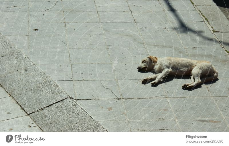 Fauler Hund Ferien & Urlaub & Reisen Tourismus Ausflug Abenteuer Stadt Tier Haustier 1 Beton atmen warten träumen Liebeskummer schlafen Mittagsschlaf