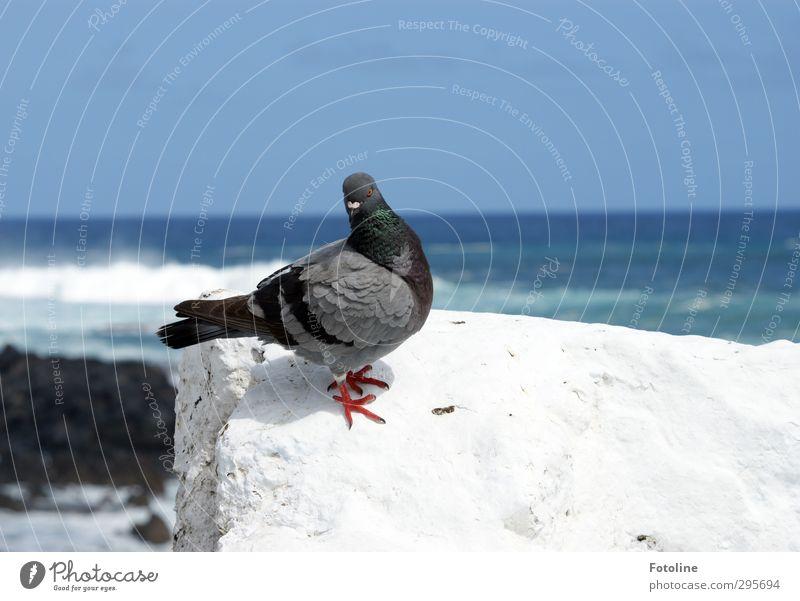 Jaaaa, und jetzt schau in die Kamera... Perfekt! Umwelt Natur Tier Urelemente Wasser Himmel Wolkenloser Himmel Sommer Schönes Wetter Wellen Küste Meer Wildtier