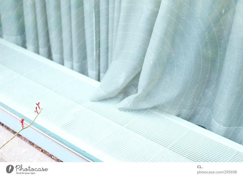 fensterplatz Häusliches Leben Wohnung Innenarchitektur Dekoration & Verzierung Natur Pflanze Frühling Blatt Blüte Wildpflanze Garten Fenster Glas Wachstum