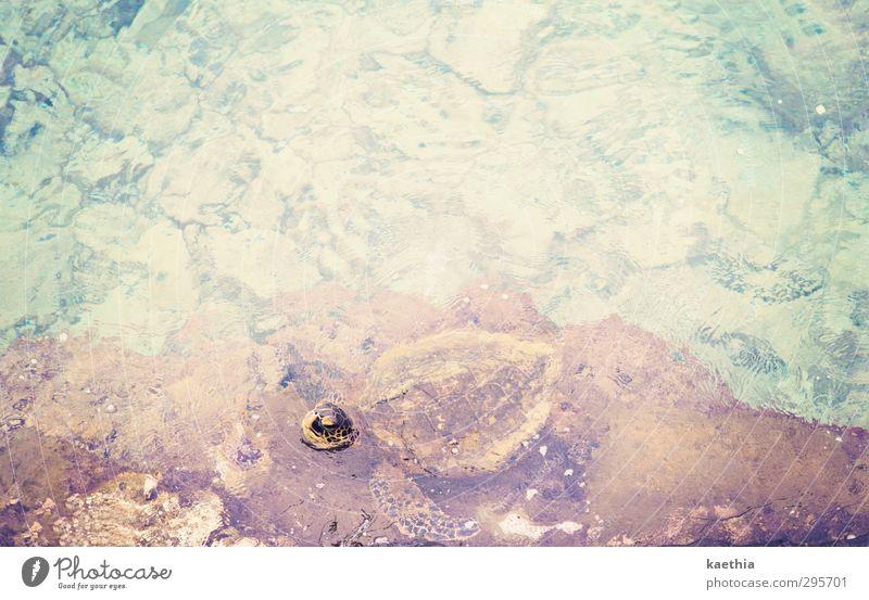 hallo? Natur Wasser Sonne Meer Landschaft Tier Strand Umwelt Küste Stein Schwimmen & Baden Sand Wellen Erde Wildtier Insel