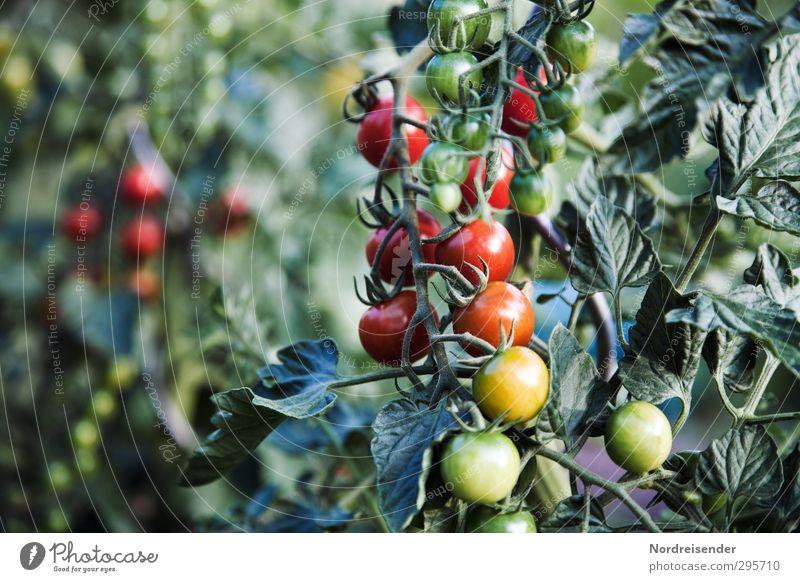 Sommer grün Pflanze rot Leben Garten Gesundheit Lebensmittel Wachstum leuchten frisch Ernährung Freundlichkeit Landwirtschaft Gemüse Duft