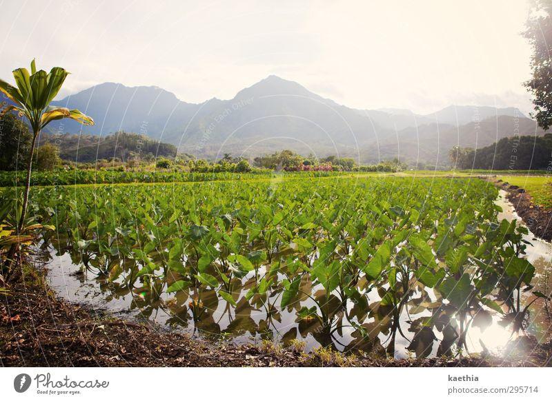 hawaiian mountains Schwimmen & Baden Sommer Sommerurlaub Sonne Insel Berge u. Gebirge Umwelt Natur Landschaft Pflanze Erde Wasser Himmel Gras Sträucher Moos