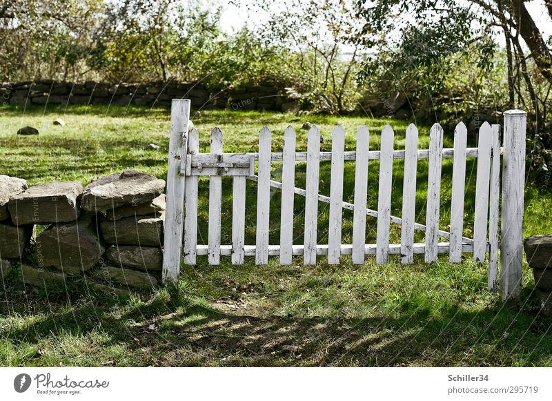 Tor zum Himmel. Sommer Baum ruhig Wiese Wand Tod Gras Frühling Traurigkeit Mauer Stein Garten natürlich Kraft Erde Schönes Wetter