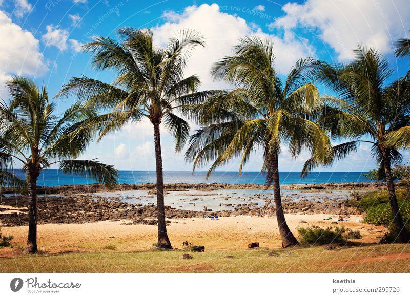 hawaii four 0 Schwimmen & Baden Ferien & Urlaub & Reisen Tourismus Abenteuer Ferne Sommer Sonne Sonnenbad Strand Meer Insel Wellen Natur Landschaft Pflanze