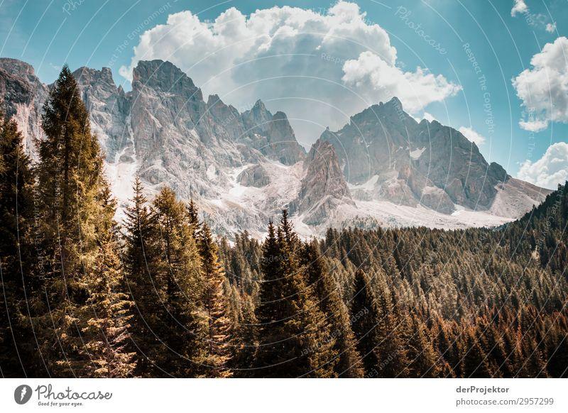 Dolomiten mit Bäumen im Vordergrund I Abenteuer wandern Schönes Wetter schlechtes Wetter Nebel Gipfel Sommer Landschaft Natur Umwelt Ferne Freiheit