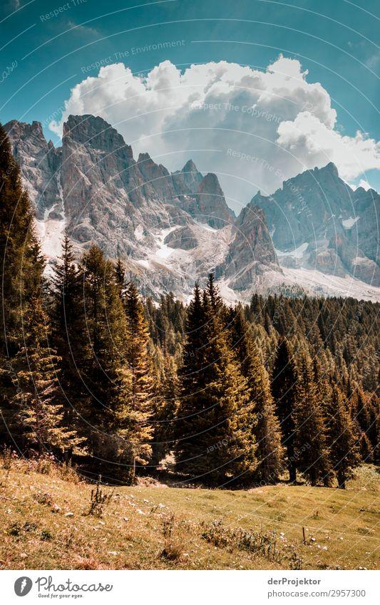 Dolomiten mit Bäumen im Vordergrund II Abenteuer wandern Schönes Wetter schlechtes Wetter Nebel Gipfel Sommer Landschaft Natur Umwelt Ferne Freiheit