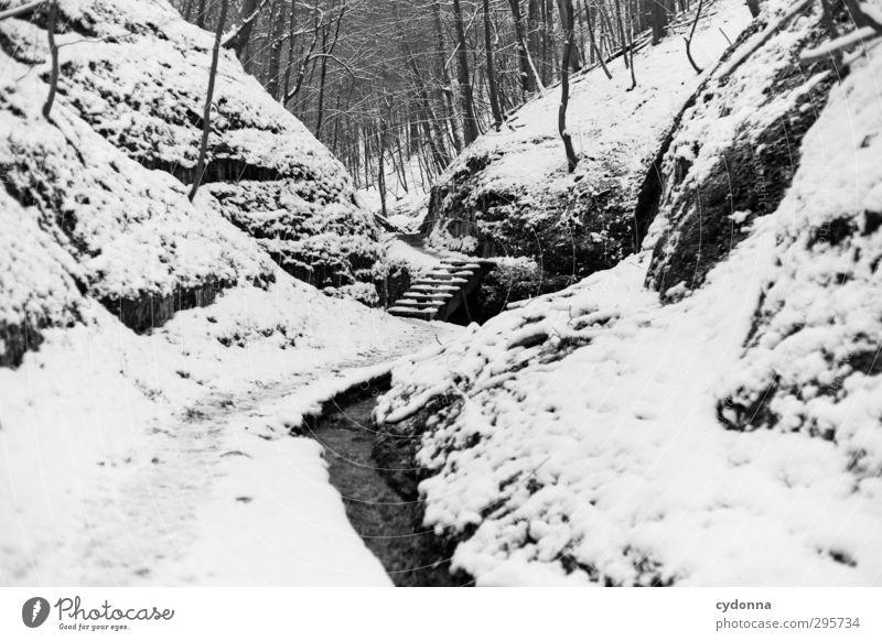 Treppe im Wald Erholung ruhig Ausflug Abenteuer Winterurlaub wandern Umwelt Natur Landschaft Eis Frost Schnee Baum Felsen Schlucht Bach Einsamkeit einzigartig