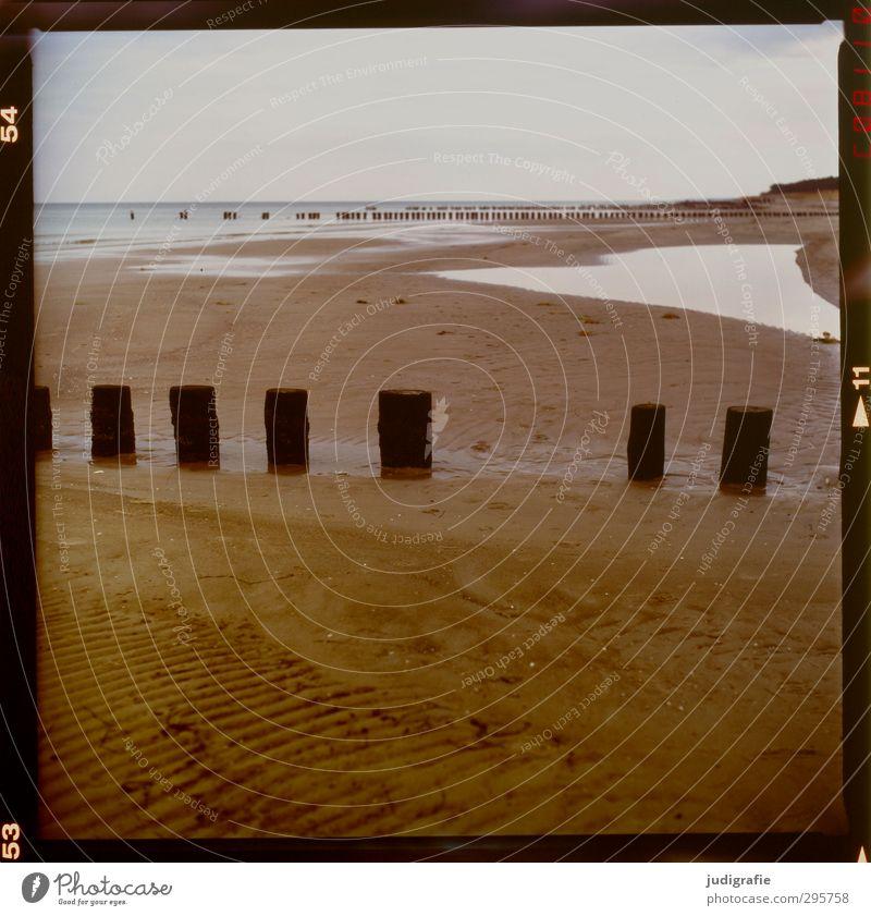 Ostsee Umwelt Natur Landschaft Klima Strand Darß Prerow kalt natürlich braun Holzpfahl Küste Farbfoto Außenaufnahme Menschenleer Tag