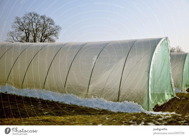 Dann pflanzen wir eben drinnen ... Umwelt Natur Himmel Winter Klima Eis Frost Schnee Baum Garten Feld kalt Gewächshaus Farbfoto Außenaufnahme Menschenleer