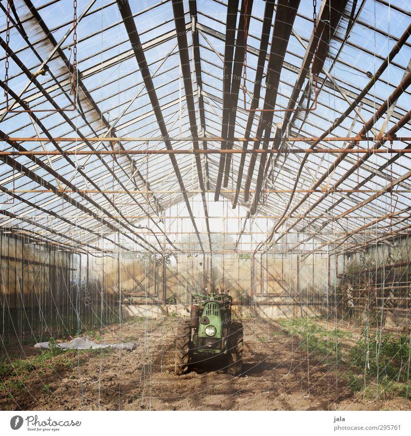 treibhaus Arbeitsplatz Gärtnerei Landwirtschaft Forstwirtschaft Himmel Pflanze Grünpflanze Nutzpflanze Bauwerk Gebäude Gewächshaus Traktor natürlich Farbfoto