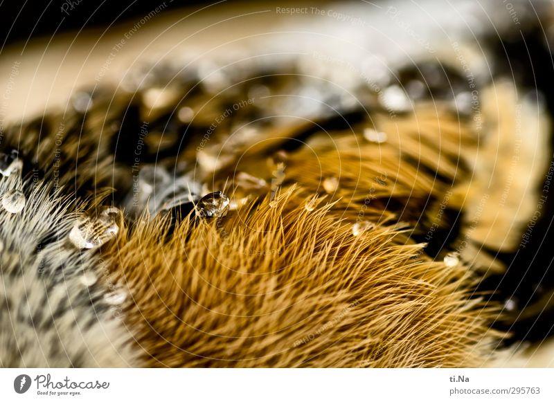 Bergfink schön weiß schwarz Tod braun liegen Vogel orange Wildtier Flügel Trauer Tierliebe Totes Tier