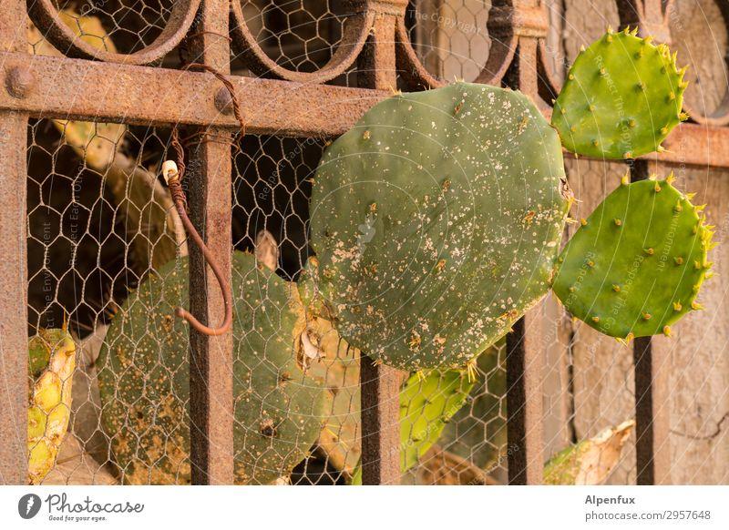 Raus aus der | Isolation Pflanze Kaktus stachelig Erfolg Kraft Willensstärke Mut Tatkraft anstrengen Entschlossenheit Freiheit Hoffnung Konkurrenz Leichtigkeit