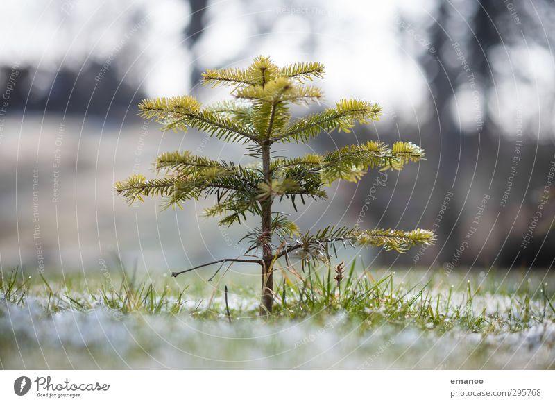 der wächst noch Umwelt Natur Landschaft Pflanze Wasser Winter Klima Wetter Baum Gras Garten Wiese Feld frieren stehen dehydrieren Wachstum dünn kalt klein