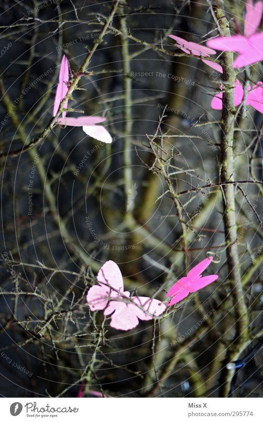 Frühlingsgefühle Pflanze Baum Sträucher Schmetterling Flügel Schwarm fliegen rosa Ast Zweige u. Äste Dekoration & Verzierung flattern Insekt