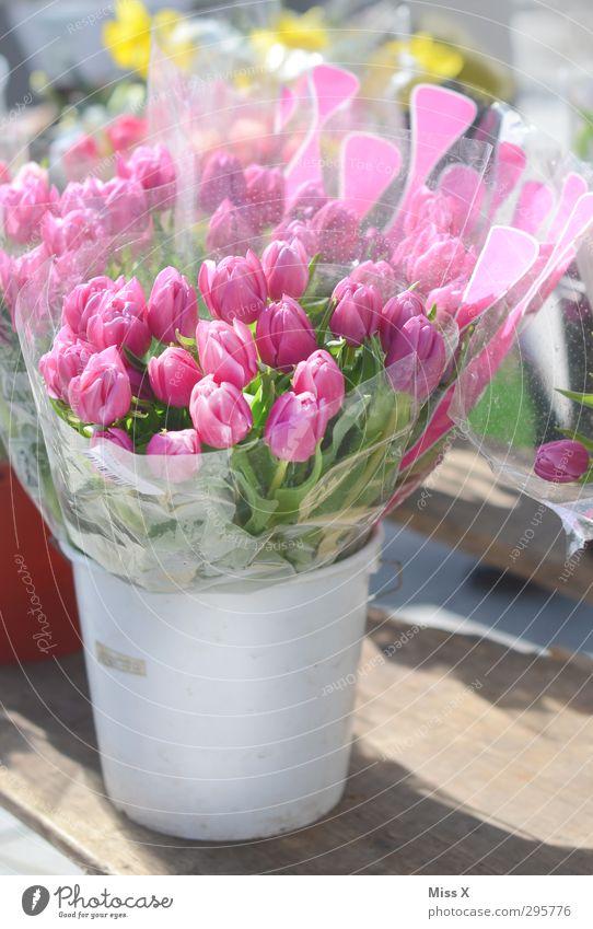 Muttertag Blume Frühling Blüte rosa Blühend Blumenstrauß Duft Tulpe Valentinstag Eimer Blumenhändler Blumenvase