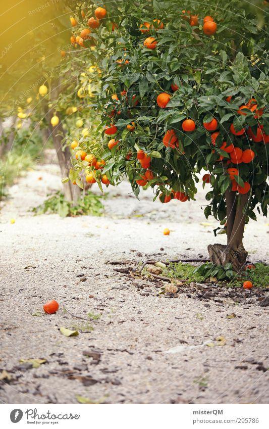 year-round. Kunst ästhetisch Orange Orangensaft Orangenhaut Orangenbaum Orangenhain Zitrone Zitronensaft Zitronenbaum Spanien Farbfoto Gedeckte Farben