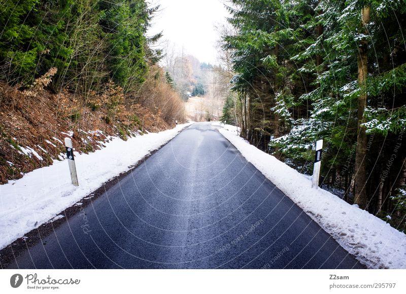 woidstraß Natur blau grün Einsamkeit Landschaft ruhig Winter Wald Umwelt dunkel kalt Schnee Straße Wege & Pfade oben Ordnung