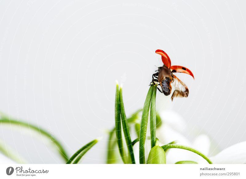 Abflug! Umwelt Pflanze Tier Frühling Blume Gras Wildtier Käfer Flügel Insekt Marienkäfer 1 rennen Bewegung festhalten fliegen Fröhlichkeit lustig niedlich schön