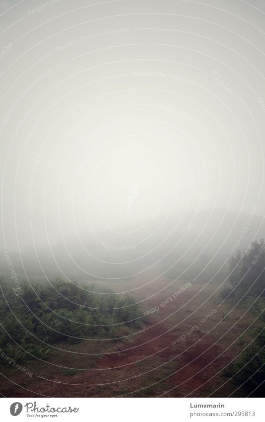 300   Weiterreise Himmel Natur Ferien & Urlaub & Reisen Einsamkeit Landschaft Umwelt dunkel Berge u. Gebirge Wege & Pfade Horizont Reisefotografie Nebel