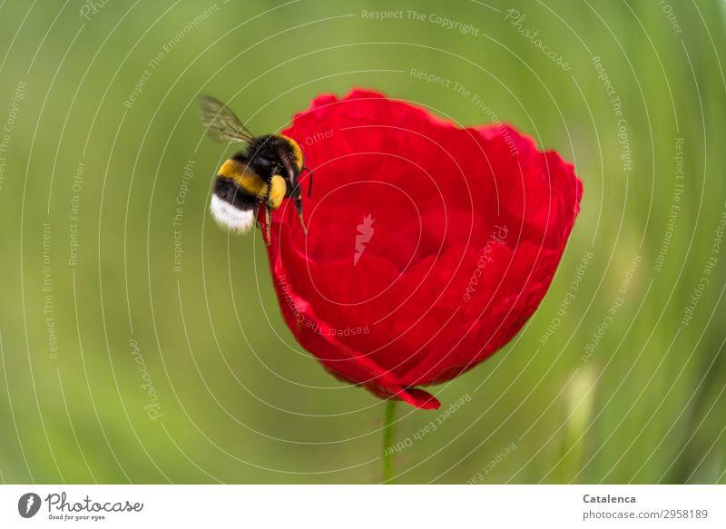 Anflug Natur Pflanze schön grün weiß rot Blume Tier schwarz Leben gelb Blüte Frühling Wiese Gras Garten