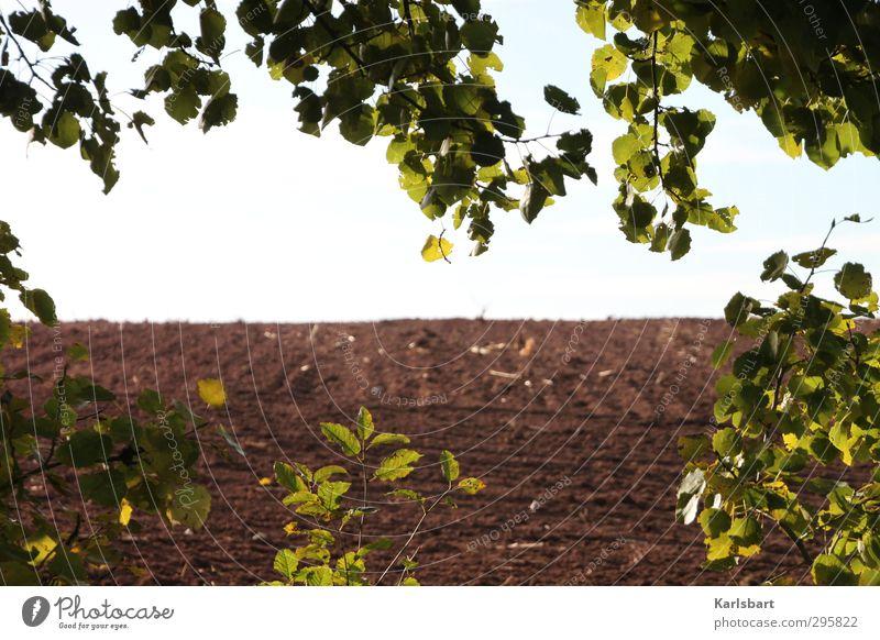 Lichtblick Erntedankfest Gartenarbeit Landwirtschaft Forstwirtschaft Umwelt Natur Erde Himmel Sonnenlicht Frühling Herbst Klimawandel Wetter Pflanze Baum
