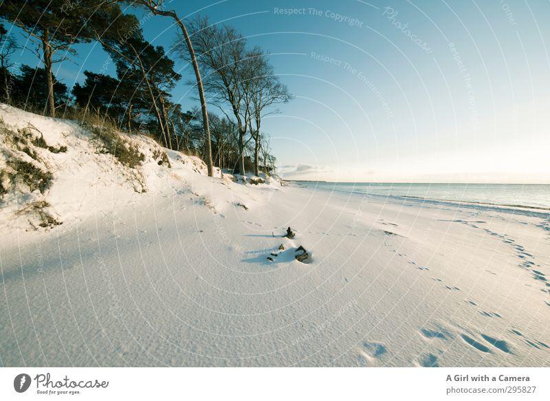fast Südsee Himmel Natur Pflanze Landschaft ruhig Winter Umwelt Schnee Küste hell Wetter Schönes Wetter weich Ostsee Wolkenloser Himmel Darß