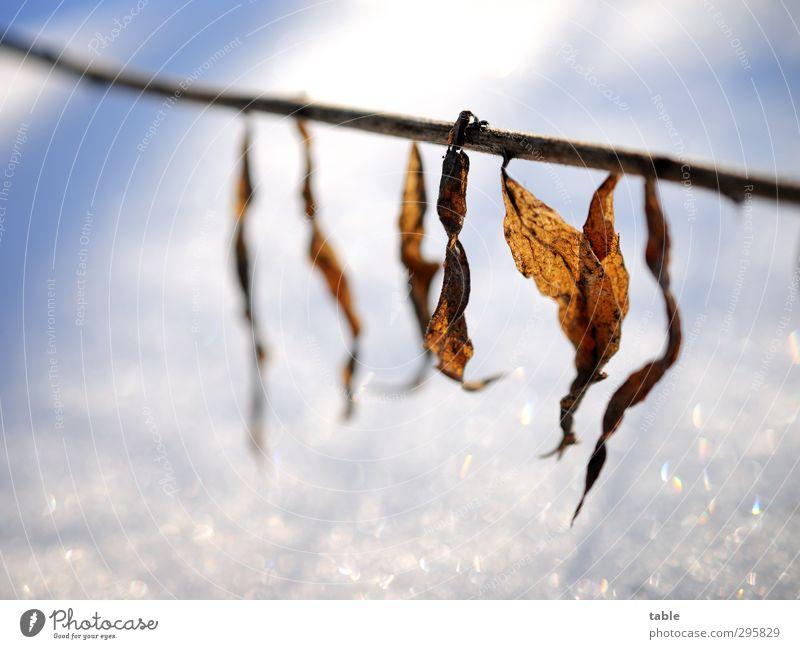 lined up Umwelt Natur Landschaft Pflanze Urelemente Sonnenlicht Frühling Herbst Winter Schönes Wetter Eis Frost Schnee Sträucher Blatt Grünpflanze Wildpflanze