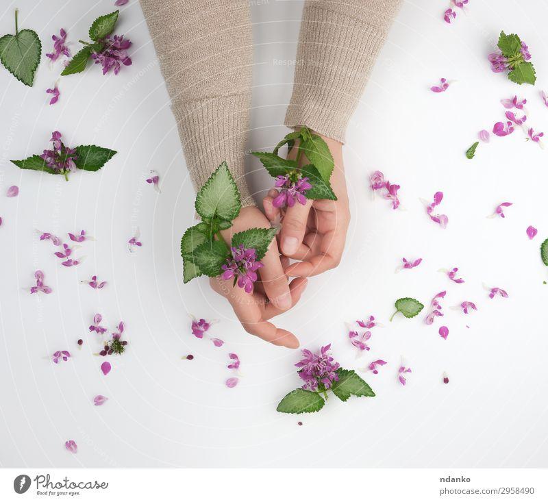 Frau Natur Sommer Pflanze schön grün weiß Hand Blume Blatt Erwachsene Blüte natürlich Mode rosa oben