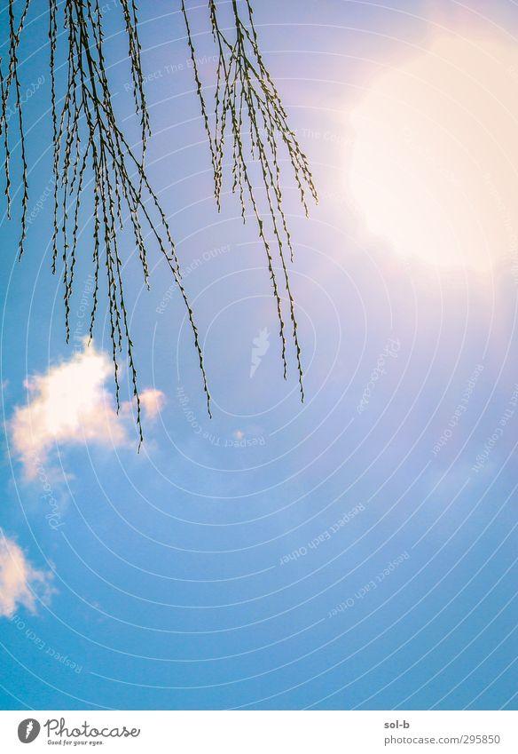 Himmel Natur blau Ferien & Urlaub & Reisen schön Sommer Pflanze Baum Sonne Freude Wolken Blatt ruhig Erholung gelb Wärme