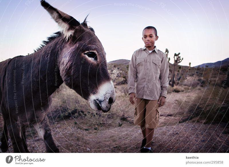 almost touched harmonisch Ausflug Abenteuer Expedition Reitsport maskulin Kind 8-13 Jahre Kindheit Sand Himmel Berge u. Gebirge Hemd kurzhaarig Tier Nutztier
