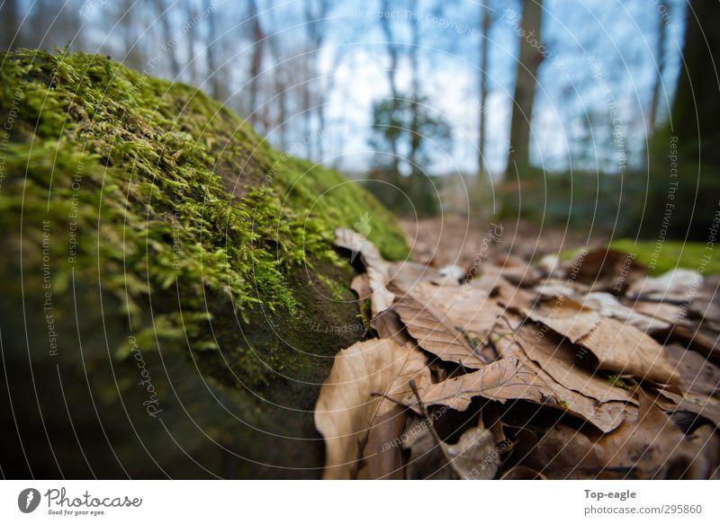 Perspektive Natur Herbst Moos Blatt Wald Waldboden nachhaltig blau braun grün Erholung Freiheit Zufriedenheit Farbfoto Außenaufnahme Nahaufnahme Menschenleer