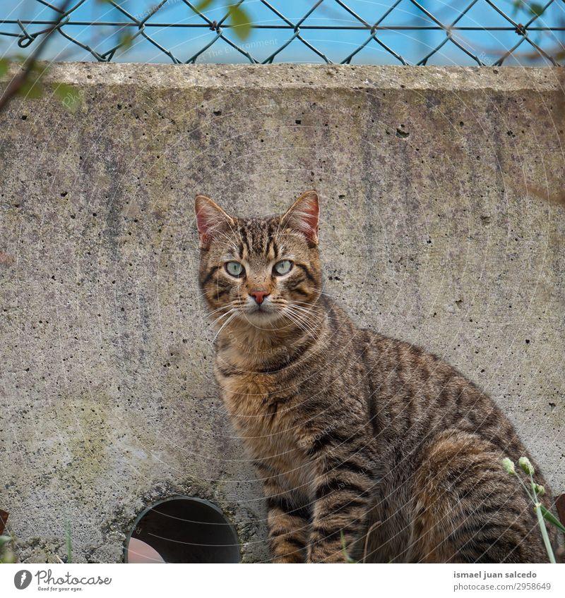 graues Katzenportrait auf der Straße, streunende Katze in der Natur Haustier Katzenbaby heimisch Backenbart Porträt Tier Kopf Auge Ohr Behaarung