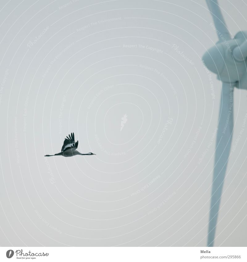 Erhöhtes Gefahrenpotential Himmel Natur Tier Umwelt Bewegung Freiheit Luft natürlich Vogel fliegen Wildtier Energiewirtschaft modern frei Perspektive gefährlich
