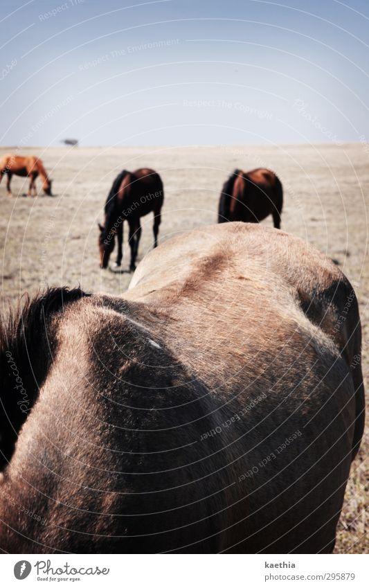 rückenparade Himmel Ferien & Urlaub & Reisen schön Tier Wiese Sport Gras Haare & Frisuren Feld elegant Wildtier Rücken wandern Ernährung Abenteuer berühren